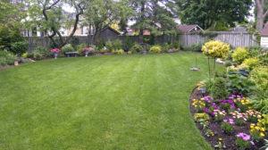 Lawn in summer